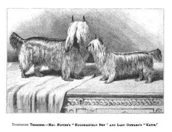Yorkshire Terrier ancestors